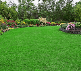 Sod Lawns