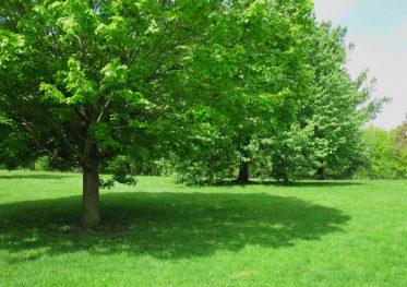 shade_tree