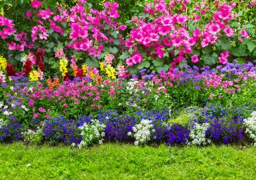pretty flowers landscaped