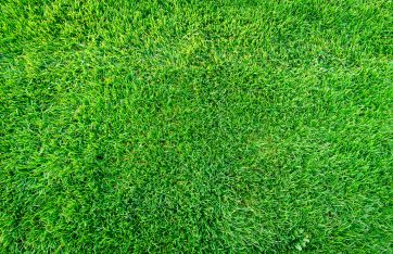 What's the best grass to use in East Texas?
