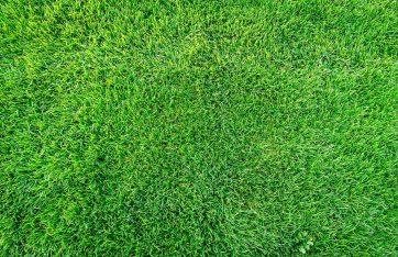 a beautiful grass lawn