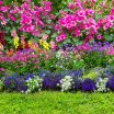 a series of well landscaped beautiful flower beds